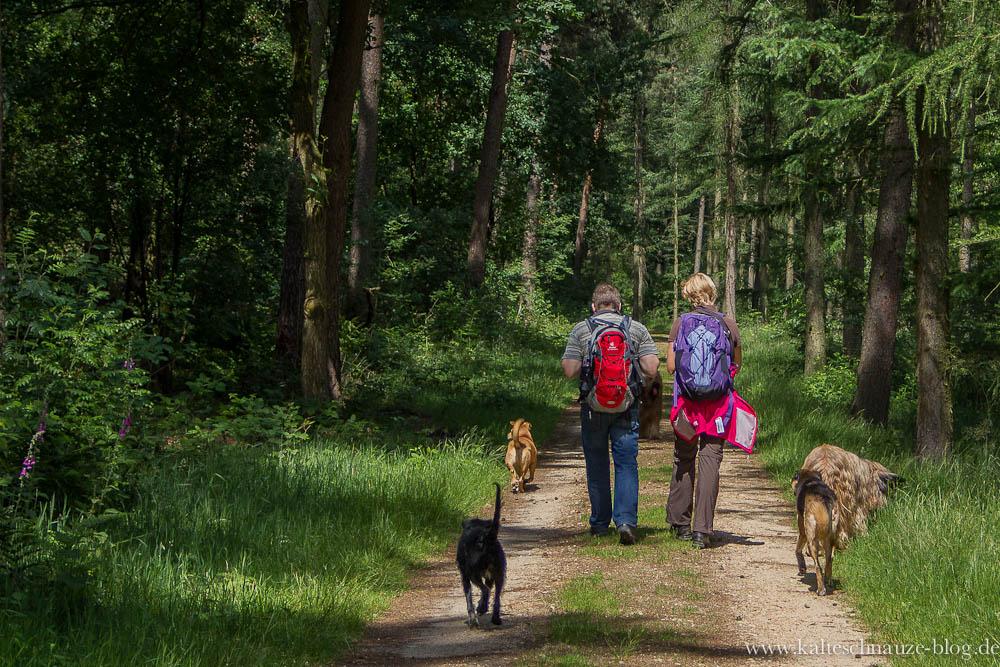 Premium Wanderweg Schwalmbruch Juni 2012_2