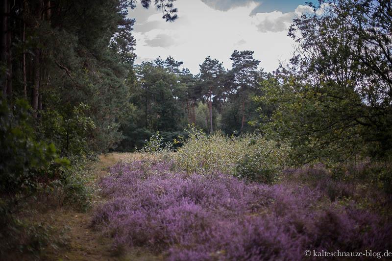 Heide - Het Leudal