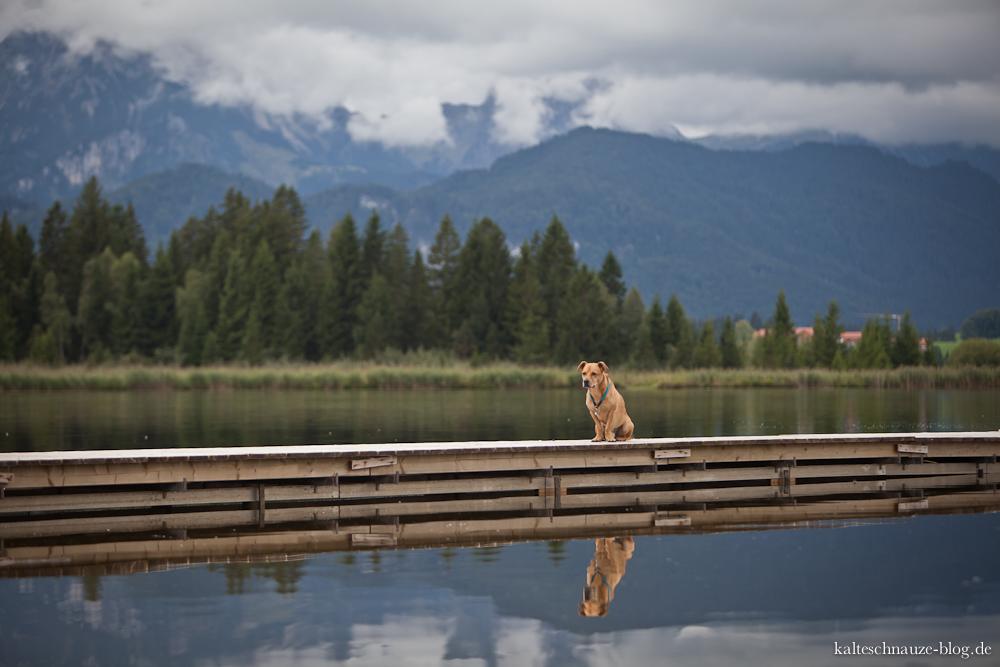 Spiegelung mit Hund am Hopfensee