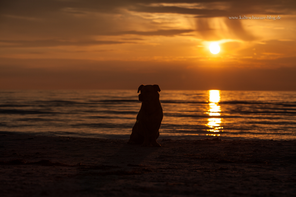 Cabo bei Sonnenuntergang - Dierhagen-Neuhaus - Ostsee