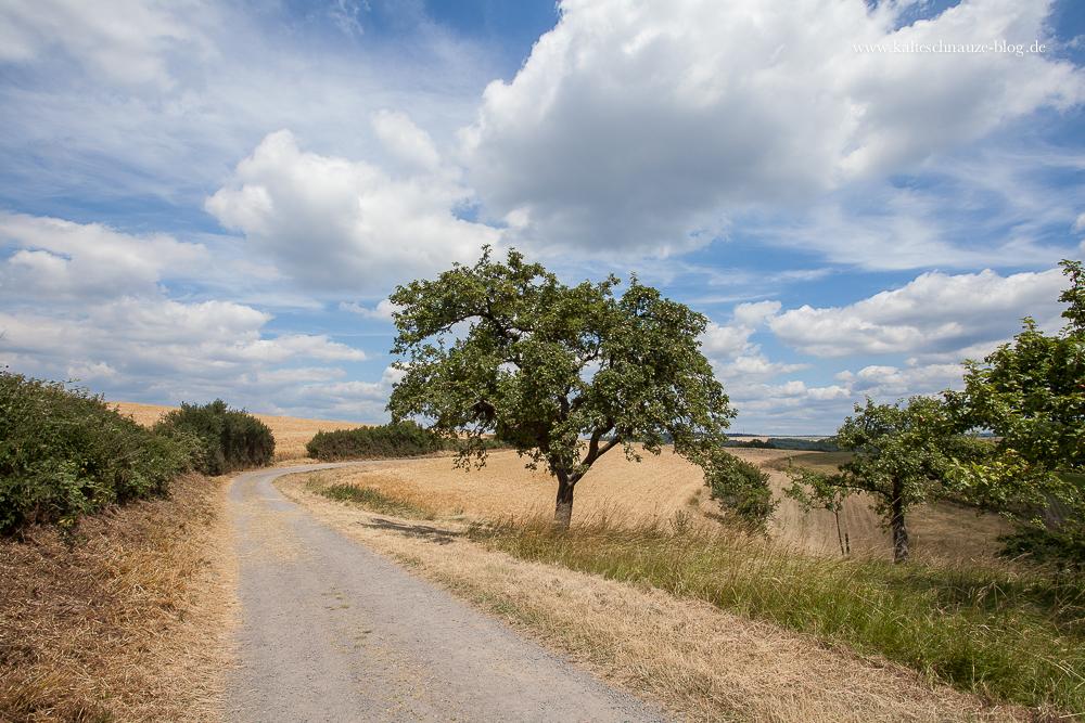Wunderschöner Panoramablick mit knorrigen Obstbäumen am Wegesrand.