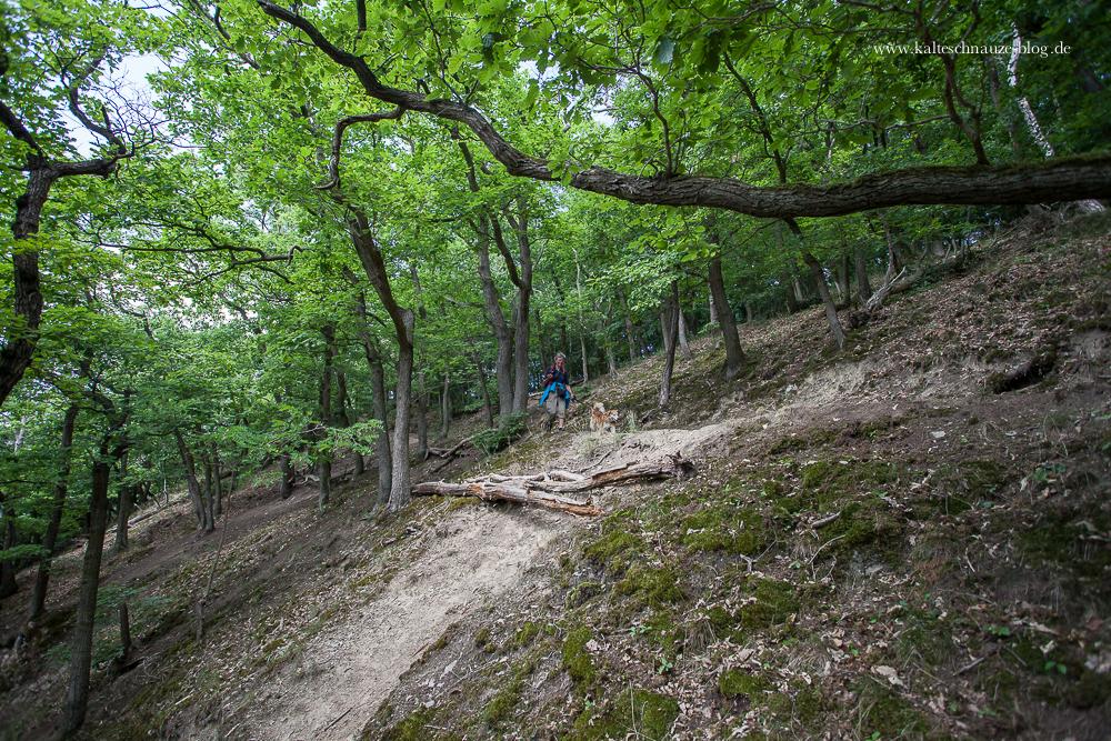 Schöner serpentinenartiger Wanderweg: der Hermann-Löns-Pfad.