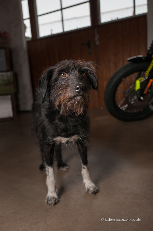 Hundin Bella von Workshop-Teilnehmerin Birgit ist ein kleiner Profi vor der Kamera.