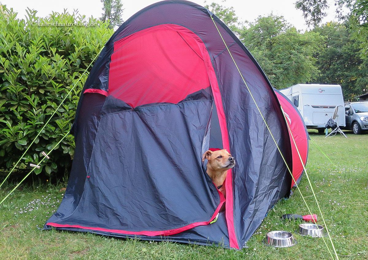 Zelt Auf Was Achten : Kalte schnauze hunde camping mit hund im zelt