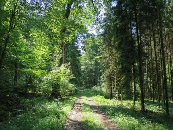 Durch den Wald im NSG Holzmaar.