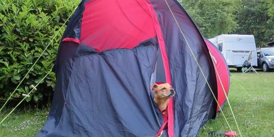 Cabo checkt die Lage aus seinem Zelt.