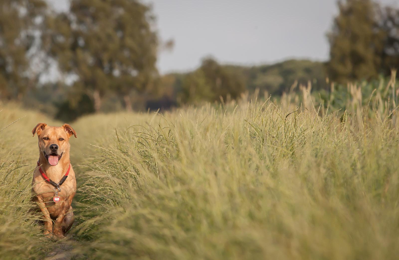 Kalte Schnauze – Hundeblog
