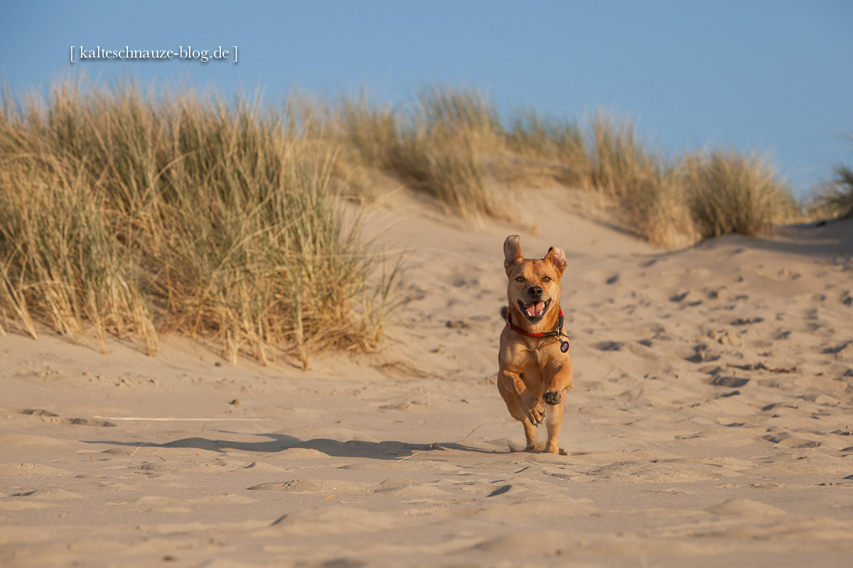 Cabo-Renesse-Strand-2013-2119