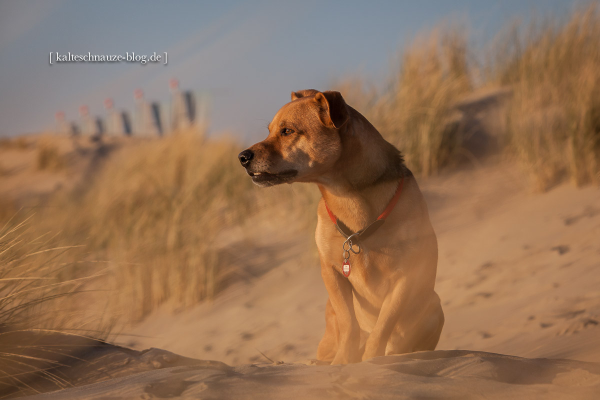 Cabo-Renesse-Strand-2013-2140