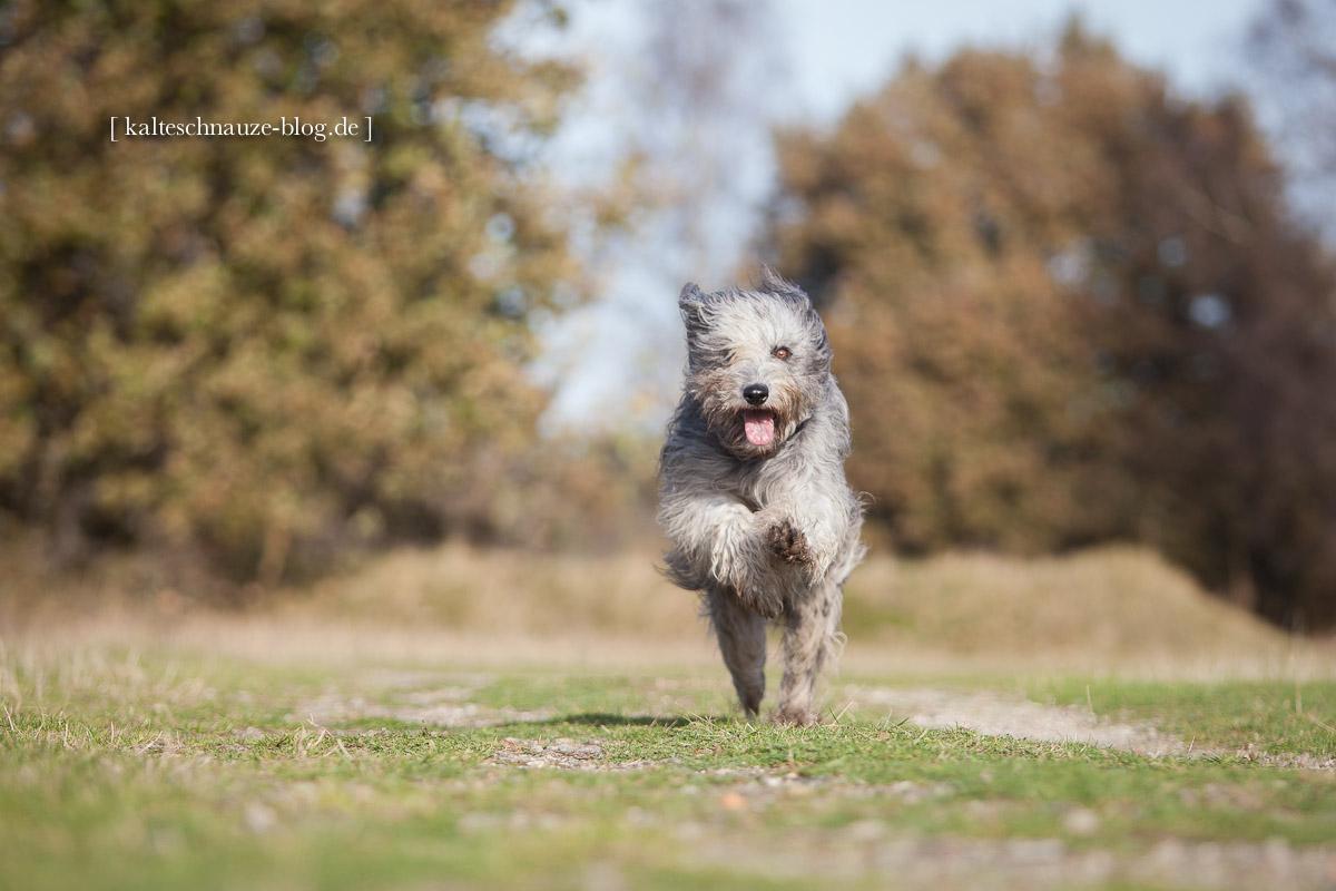 Sima_venloer-heide_2014-7694