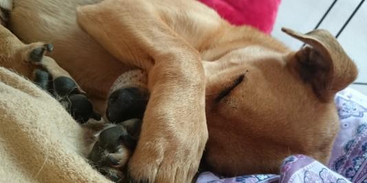 6 tipps wie du bessere fotos von deinem hund machst. Black Bedroom Furniture Sets. Home Design Ideas