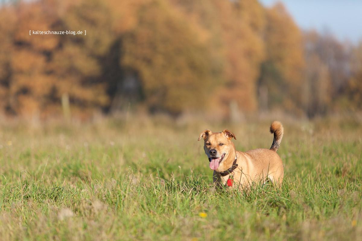 Schwalmbruch-November-2015-Kalte-Schnauze-Hundeblog-2340
