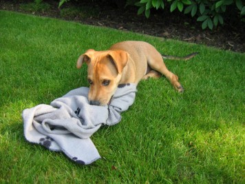 An Decken genuckelt hat er schon als Welpe.