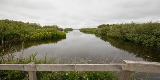 het-zwanenwater-callantsoog-4826