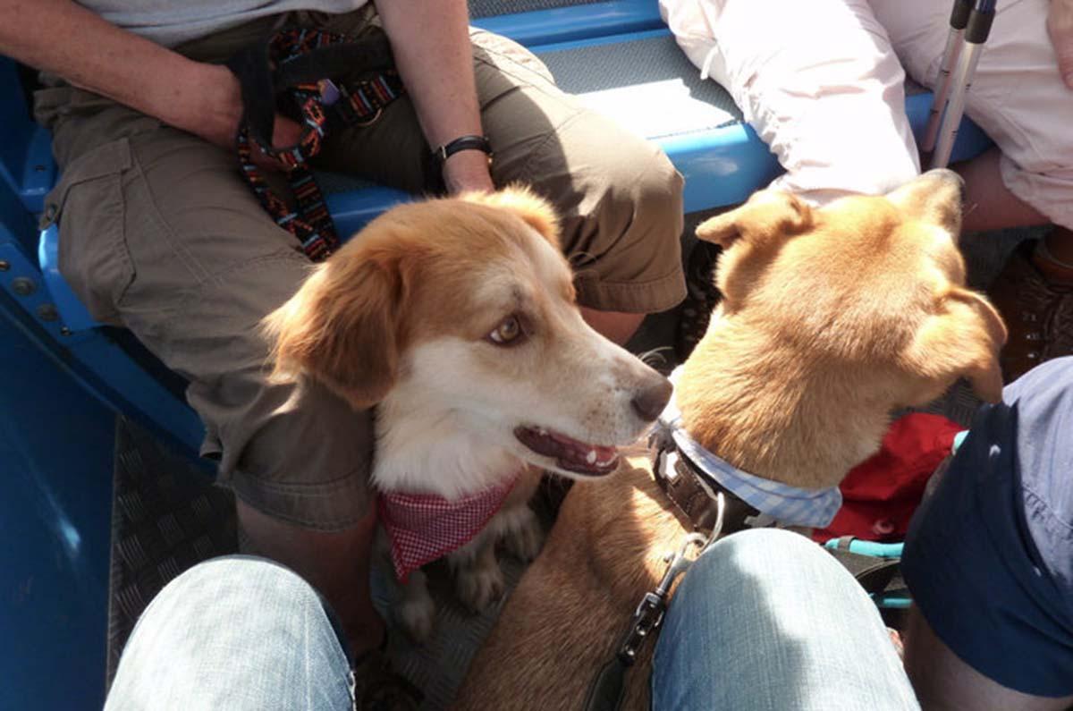 hunde-in-derhornbahn-hindelang-allgaeu